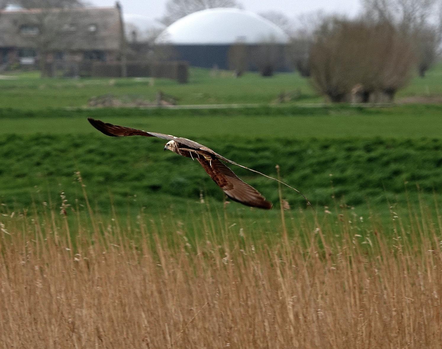 wandelen met sjaak roofvogel
